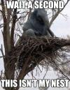wait a minute this isn't my nest, elephant in a tree, wtf, meme