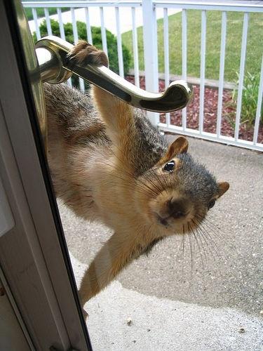 squirrel, door, wtf