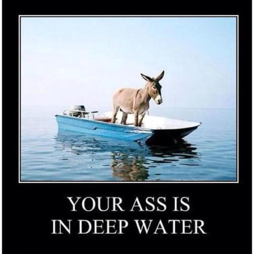 motivation, ass, deep water, boat, donkey