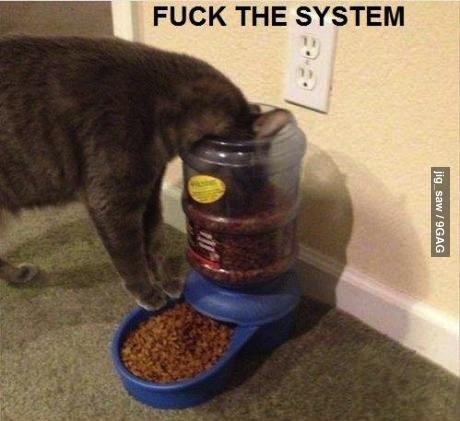 cat, food