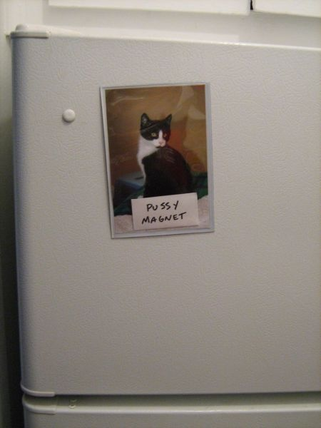 pussy magnet, cat picture on refrigerator, pun, wordplay