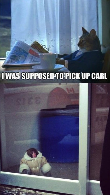 I was supposed to pick up carl, cat, ikea monkey, meme