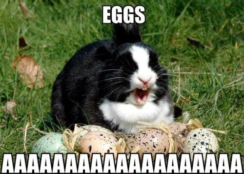 easter bunny, eggs, rabbit, wtf, meme