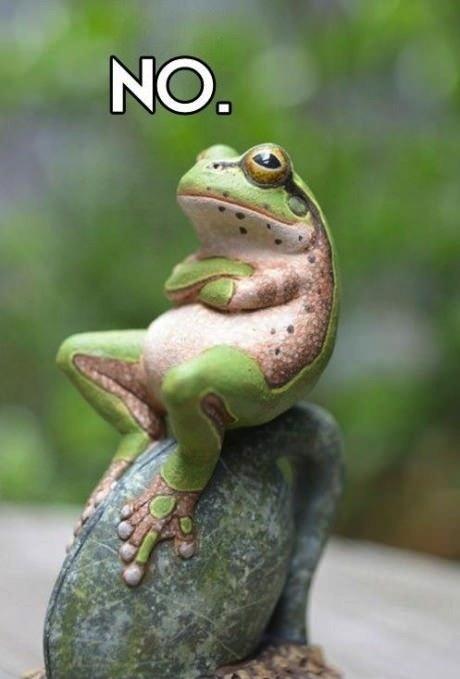 frog, no, meme