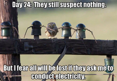 day 24 they still suspect nothing, but I fear all will be lost if they ask me to conduct electricity, meme