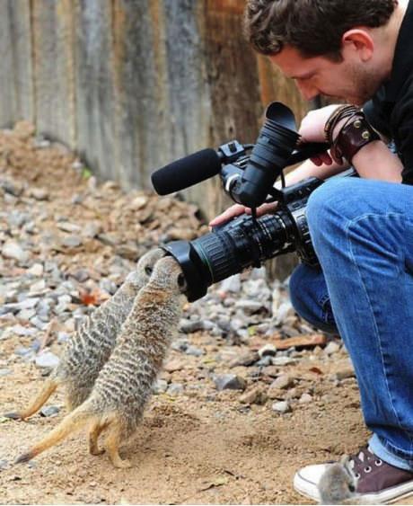 animal, camera, lol, close up