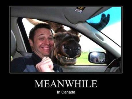 motivation, moose, canada, meanwhile