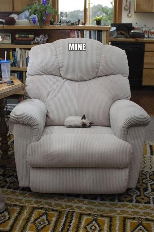 cat, chair, lazy boy, meme