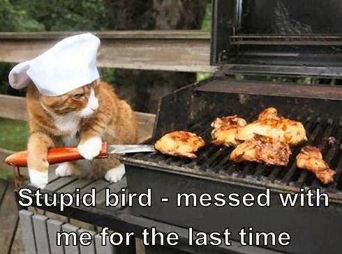cat, bbq, chef, bird, meme