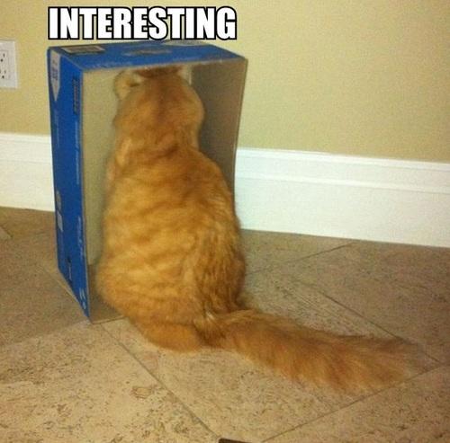 cat, box, wtf, interesting, meme