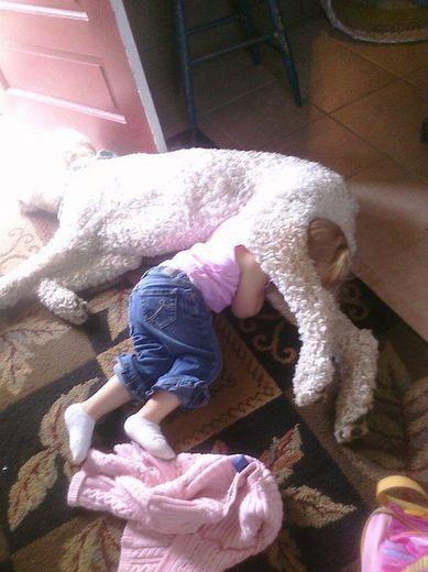 sleep, dog, kid, fail, worst