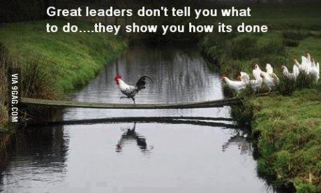 leader, cock, chicken, boss