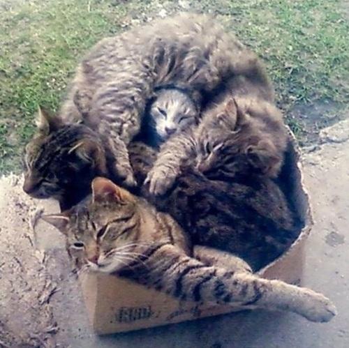 cat, box, full, lol, cute