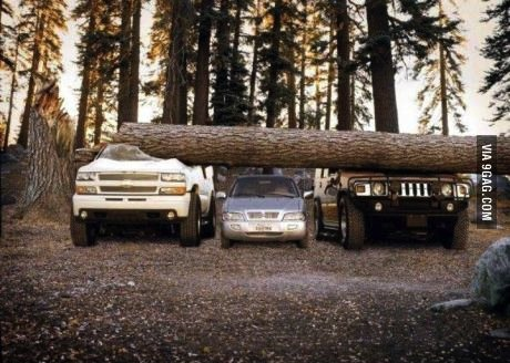 tree, car, truck, suv, jeep