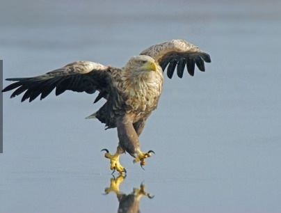 eagle, timing, water