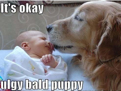 dog, baby, lick, meme