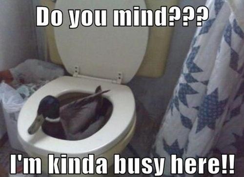 duck, toilet, wtf, meme