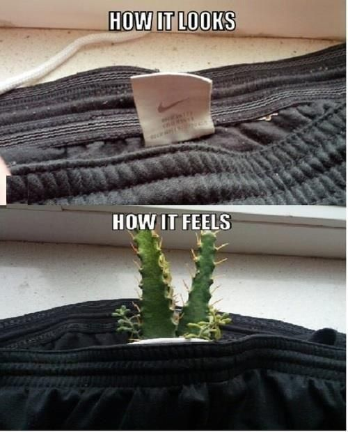 how it looks, how it feels, expectation, reality, cactus, shirt tag