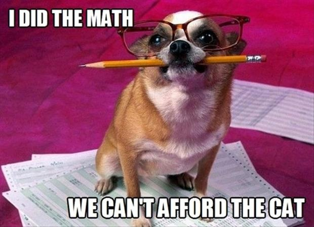 I did the math we can't afford the cat, dog, meme