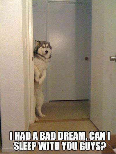 I had a bad dream, can I sleep with you guys?, nightmare dog, meme