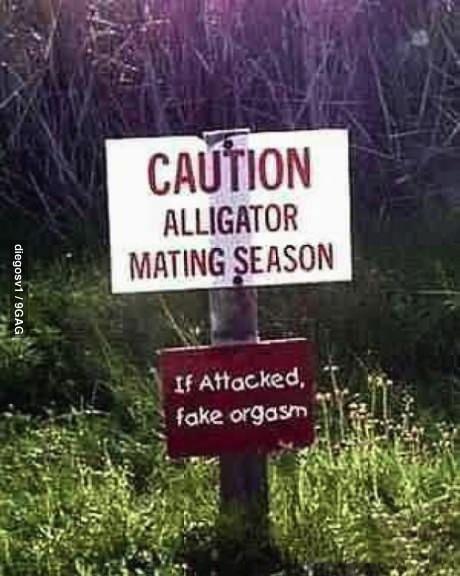 caution, alligator, mating season, lol, fake orgasm'