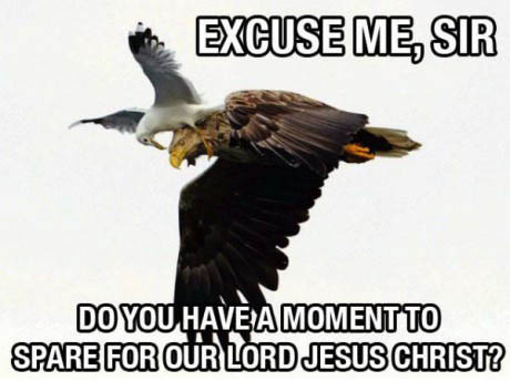 meme, eagle, seagull, jehovah's witnesses