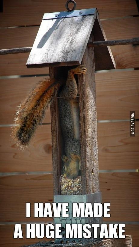 squirrel, meme, mistake, food, stuck