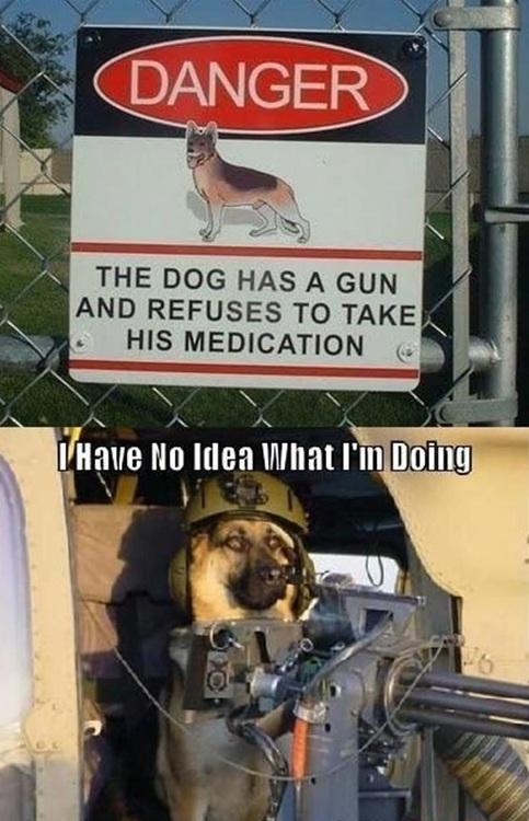 dog, gun, sign, beware
