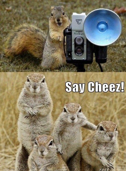squirrel, photograph, family portrait