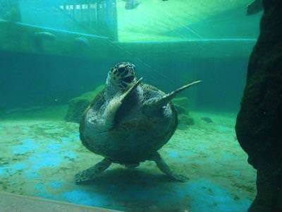 Ridiculously photogenic turtle, dancing turtle caught on camera