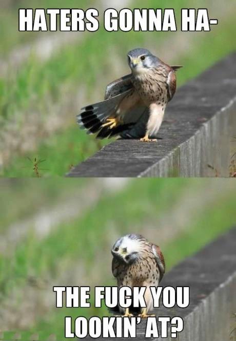 haters, eagle, meme