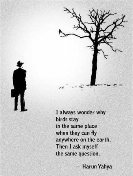 I always wonder why birds stay in the same place, when they can fly anywhere on the earth, then I ask myself the same question, harun yahya
