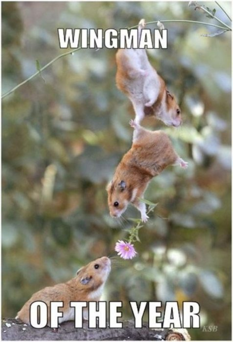 hamster, wingman, flower