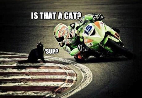 is that a cat?, sup?, cat sitting on side of motorcycle race track, wtf, lol