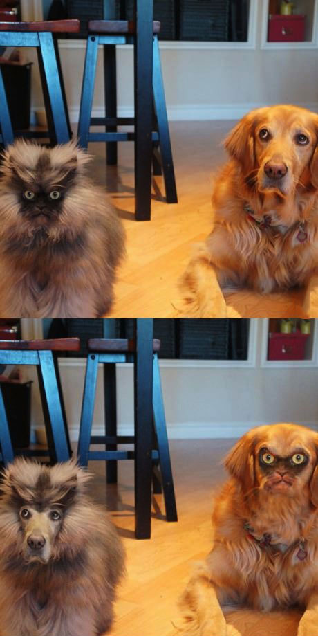 dog, cat, scary, photoshop