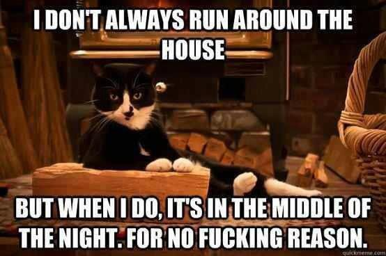 I don't always run around the house but when I do, it's in the middle of the night for no fucking reason, cat