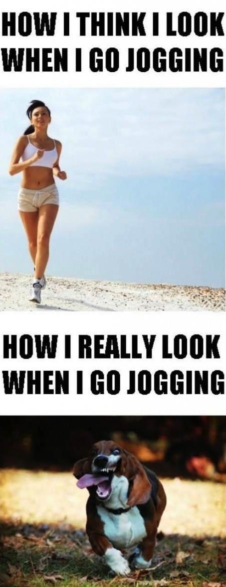 meme, jogging, expectation, reality, dog