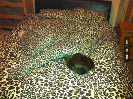 camouflage, level, girlfriend, leopard print