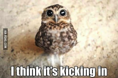 I think it's kicking in, owl with huge pupils