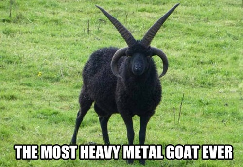 the most heavy metal goat ever, meme