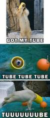 polar bear, tube, toy, cute