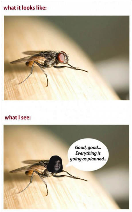 mosquito, expectation, reality