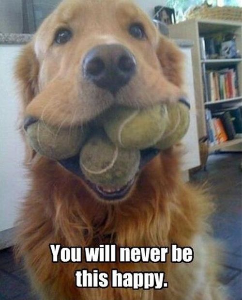 dog, balls, happy, meme