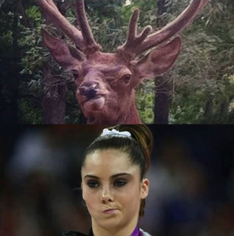 this moose totallylookslike McKayla Maroney
