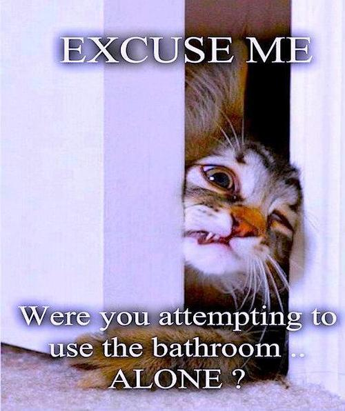 excuse me were you attempting to use the bathroom alone?, meme, cat