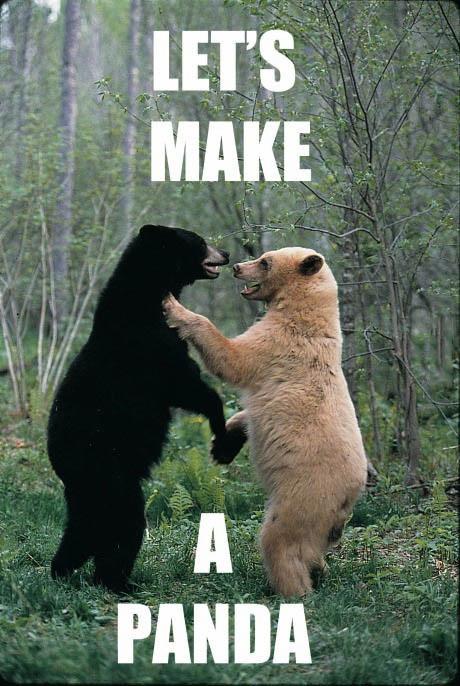 let's make a panda, bear, white, black