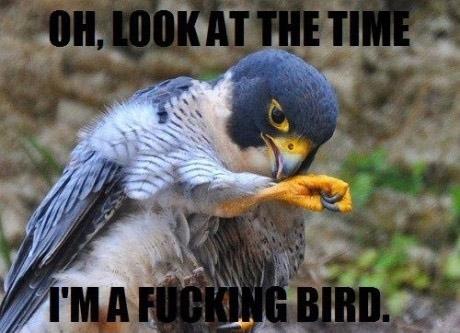 meme, bird, time, wtf