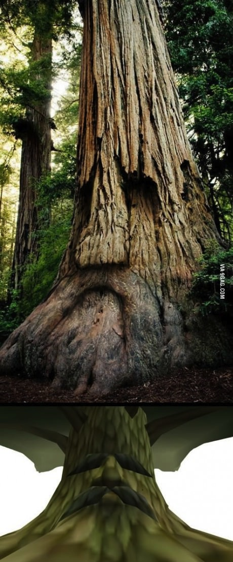 tree, face, totallylookslike