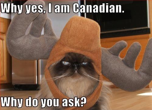 cat, moose, canadian, meme