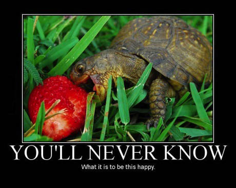you'll never know what it is to be happy, motivation, turtle eating a strawberry